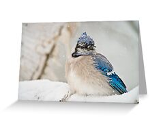 Blue Jay In Spring 2 Greeting Card