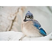 Blue Jay In Spring 2 Photographic Print