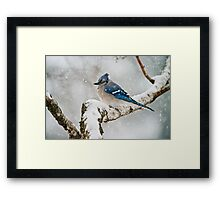 Blue Jay In Spring 3 Framed Print