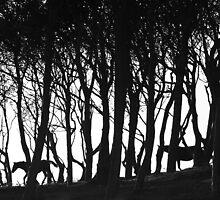 Wood n Horses by EUNAN SWEENEY