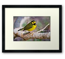Hooded Warbler Framed Print