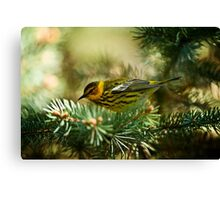 Cap May Warbler Canvas Print