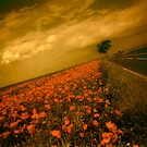 Poppy Road by LAURANCE RICHARDSON