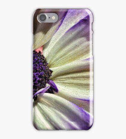 Pericallis Senetti iPhone Case/Skin