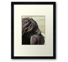 Shetland Mare and Foal Framed Print