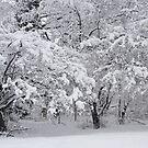 Snow Storm in NJ by Monica Engeler