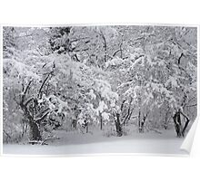Snow Storm in NJ Poster