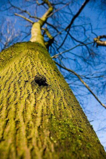 The Tree, Preston Nature Reserve, England by Brett Still