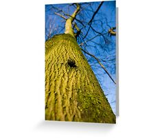 The Tree, Preston Nature Reserve, England Greeting Card