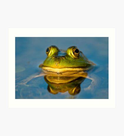 Pond Frog Art Print
