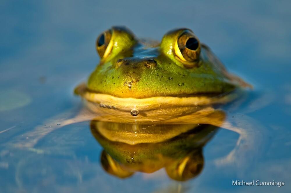 Pond Frog by Michael Cummings