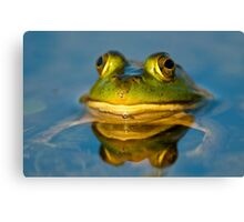 Pond Frog Canvas Print