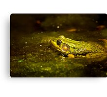 Green Frog In Algae Canvas Print
