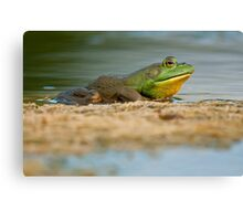 Pig Frog Relaxing Canvas Print