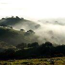 Foggy extravaganza by MichaelBr