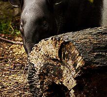 Peek-a-Boo by Ryan Davison Crisp