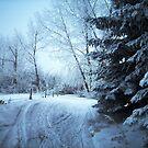 A Jagged Gorgeous Winter by Rhonda Blais