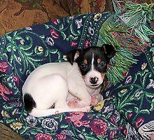 Ringo Pup by John  McCoy