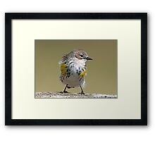 Now you've gone and ruffled up my feathers! Framed Print