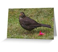 Ms Blackbird Greeting Card