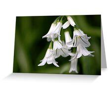 Galanthus nivalis Greeting Card