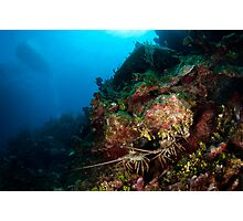 Lobsters den Photographic Print