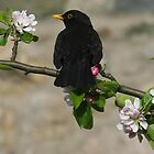 Mr Blackbird by christopher363