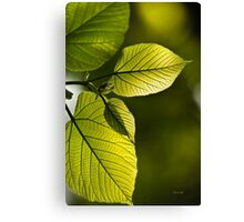 Shades of Green Leaf Abstract Canvas Print