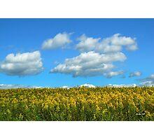 Country Field with Flowers Photographic Print
