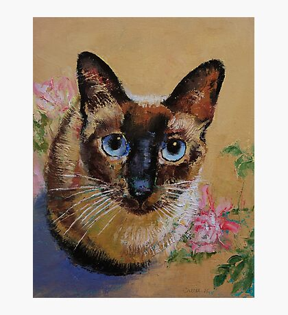 Siamese Cat Photographic Print