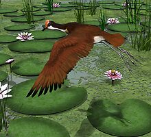 Comb-crested Jacana by Walter Colvin