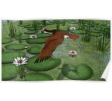 Comb-crested Jacana Poster