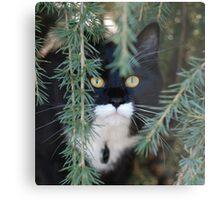 Eugene Kitten Metal Print
