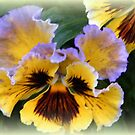 Pansy with Ears by ElsT
