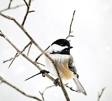 Charming Winter Chickadee by Christina Rollo