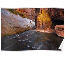 Zion Narrows Fall Color Poster