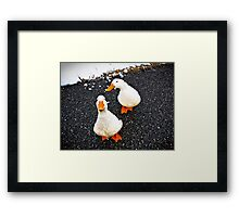 Renegade Ducks Framed Print