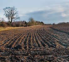 Frozen Furrows.. by Billlee