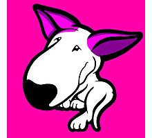 Pink Ears English Bull Terrier Puppy Photographic Print