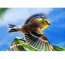 Flying Goldfinch Painting Photographic Print