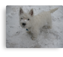 Westies and Snow, the perfecto combo! Canvas Print