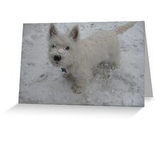 Westies and Snow, the perfecto combo! Greeting Card