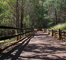 Path to Endeavour Park Tamworth NSW by Bernie Stronner