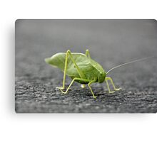 The katydid is crawling. Canvas Print