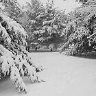 Winter Pines by Pal Gyomai