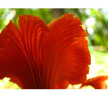 Pretty in Red Photographic Print