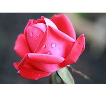 Tropicana Rose  Photographic Print
