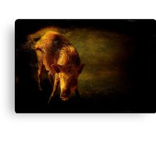 Piggy in his den Canvas Print