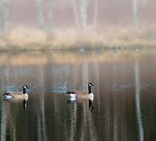 Late Afternoon at the pond by Jeffrey  Sinnock