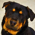 AND THIS IS SHEBA - 8 MONTHS by Paul Quixote Alleyne